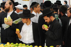 Mercado de quatro espécies para o feriado judaico de Sukkot Fotografia de Stock