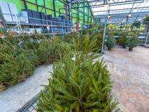 Mercado del árbol de navidad Foto de archivo