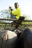 Mercado del búfalo Foto de archivo libre de regalías
