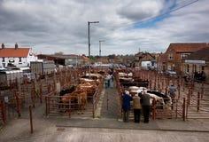 Mercado del ganado de Malton - las plumas de ganado exteriores foto de archivo