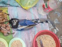 Mercado do amanhecer em Luang Phabang Comércio ilegal dos animais selvagens em Laos fotografia de stock