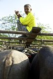 Mercado do búfalo Foto de Stock Royalty Free