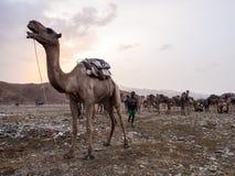Mercado do camelo de longe a região em Etiópia do norte foto de stock royalty free