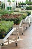 Mercado do jardim Imagens de Stock Royalty Free