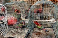 Mercado do pássaro de Pramuka, Jakarta, Indonésia imagens de stock royalty free