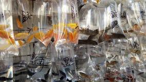 Mercado do peixe dourado Fotos de Stock