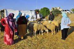 Mercado dos carneiros de Eid, seleção dos carneiros Imagem de Stock
