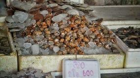 Mercado en Tailandia con los pescados Imagen de archivo libre de regalías