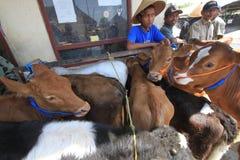 Mercados de la vaca Imagen de archivo libre de regalías