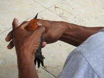 Mercato animale in Bali Indonesia Immagine Stock Libera da Diritti