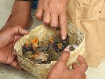 Mercato animale in Bali Indonesia Fotografie Stock Libere da Diritti