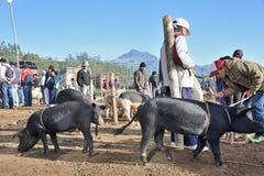 Mercato animale in Otavalo, Ecuador immagini stock libere da diritti