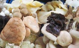Mercato degli agricoltori dei funghi Fotografia Stock