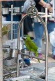 Mercato degli uccelli Fotografie Stock Libere da Diritti