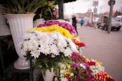 Mercato dei fiori Immagini Stock Libere da Diritti