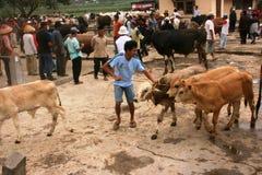 Mercato del bestiame Fotografie Stock Libere da Diritti