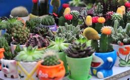 Mercato del cactus Fotografia Stock