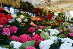 Mercato del fiore della strada di Colombia a Londra Immagine Stock