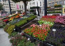 Mercato del fiore a Gand Fotografia Stock