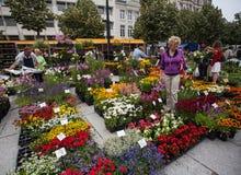 Mercato del fiore a Gand Fotografia Stock Libera da Diritti