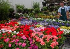Mercato del fiore a Gand Immagine Stock Libera da Diritti
