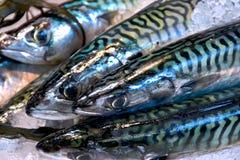 Mercato del pesce @ Immagini Stock Libere da Diritti