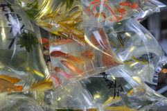 Mercato del pesce rosso in Hong Kong Fotografie Stock Libere da Diritti