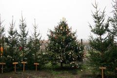 Mercato dell'albero di Natale Fotografie Stock Libere da Diritti