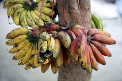 MERCATO DELL'ASIA TIMOR ORIENTALE TIMOR EST DILI Fotografie Stock Libere da Diritti