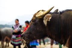 Mercato della Buffalo nel Vietnam Fotografia Stock