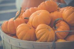 Mercato di autunno con le zucche Immagini Stock