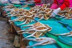 Mercato di Jagalchi - mercato ittico a Pusan Busan, Corea del Sud - varietà di stupore di pesce, di vongole, ecc fotografie stock