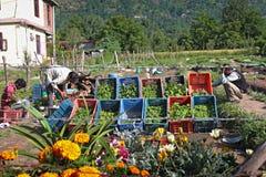 Mercato di verdure locale di un villaggio in India Fotografia Stock Libera da Diritti