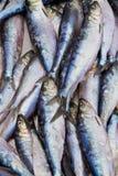 Mercato fresco dei frutti di mare Fotografie Stock Libere da Diritti