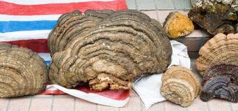 Mercato Guangzhou Cina dell'alimento dei funghi del fungo dell'albero Fotografia Stock