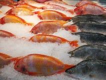 Mercato ittico, alimento Fotografie Stock