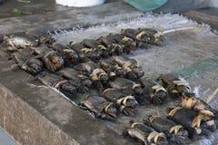 Mercato ittico della Papuasia Nuova Guinea! fotografia stock libera da diritti