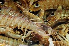 Mercato ittico - gamberetto di mantide (squilla mantis) immagine stock
