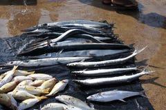 Mercato ittico in Negombo Fotografie Stock