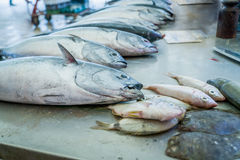Mercato ittico nella spaccatura, Croazia Immagine Stock Libera da Diritti