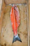 Mercato ittico, pesce fresco Fotografia Stock Libera da Diritti