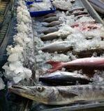 Mercato ittico in provincia Kerala, barracuda in priorità alta Fotografia Stock Libera da Diritti