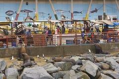 Mercato ittico in Valparaiso, Cile Fotografia Stock Libera da Diritti