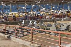 Mercato ittico in Valparaiso, Cile Fotografie Stock Libere da Diritti