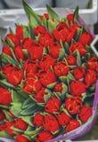 Mercato rosso Amsterdam Holland Netherlands del fiore dei tulipani Immagine Stock Libera da Diritti