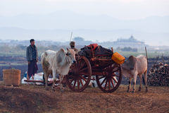 Mercato settimanale nello Stato Shan, Myanmar Fotografie Stock