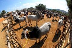 Mercato tradizionale della mucca e del bufalo Fotografia Stock Libera da Diritti