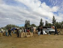 Mercato verde oliva in kairouan fotografia stock libera da diritti