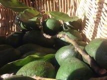 Merce nel carrello degli avocado Immagine Stock