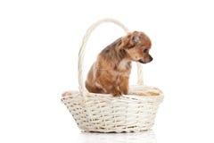 Merce nel carrello del cane isolata su fondo bianco Fotografia Stock Libera da Diritti